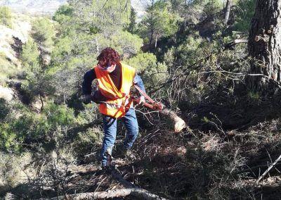 Integra Todos aprovechamientos forestales